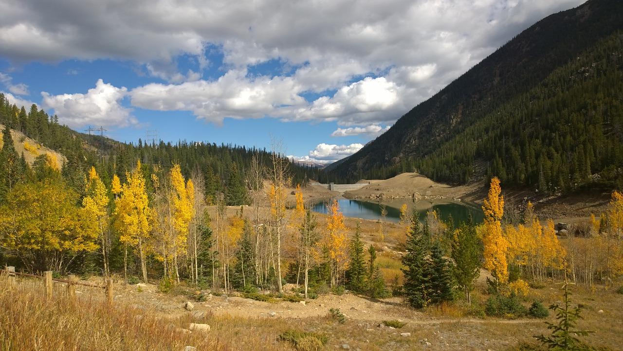 Aspen Trees in Colorado
