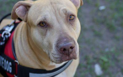 Service Dog Rental Laws